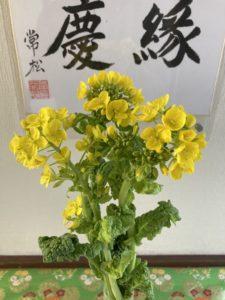 3月は菜の花です